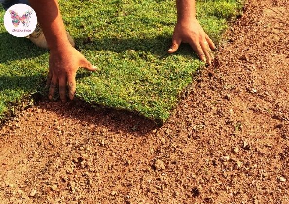 What Is Sod Cutter | ChildArticle
