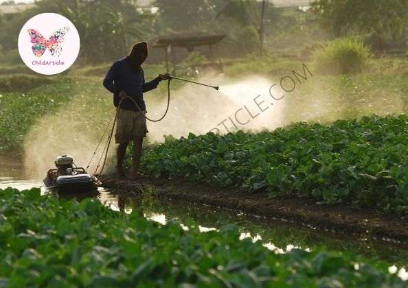 Best Insecticide For Vegetable Garden | ChildArticle