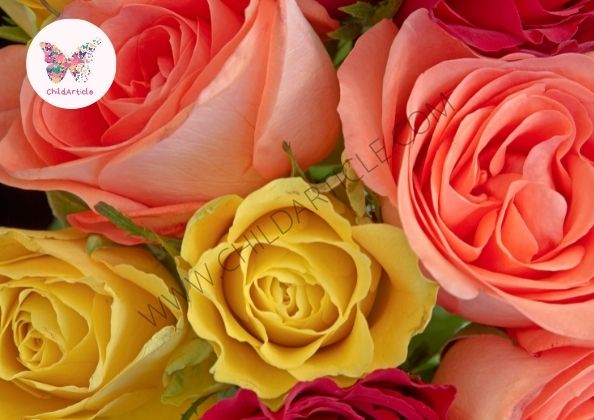 Colour Of Rose | ChildArticle